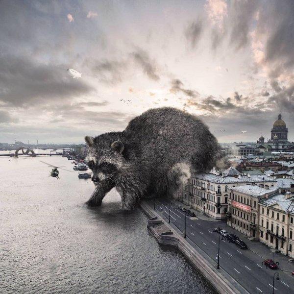 Во время карантина в реки Петербурга стали возвращаться гигантские ультра-еноты