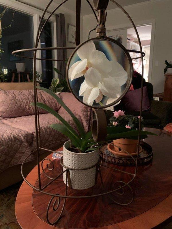 Рамка, которая прикрепляется к горшку с орхидеями и позволяет рассмотреть цветок поближе