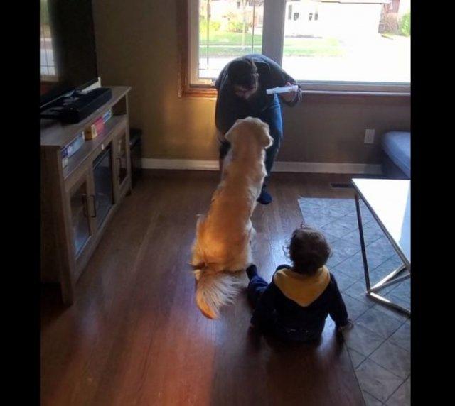 Одинаковое воспитание собаки и ребенка