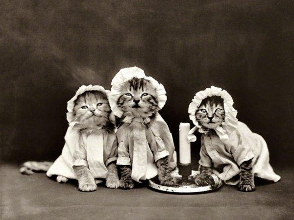 Кошачья фотосессия из 1914 года