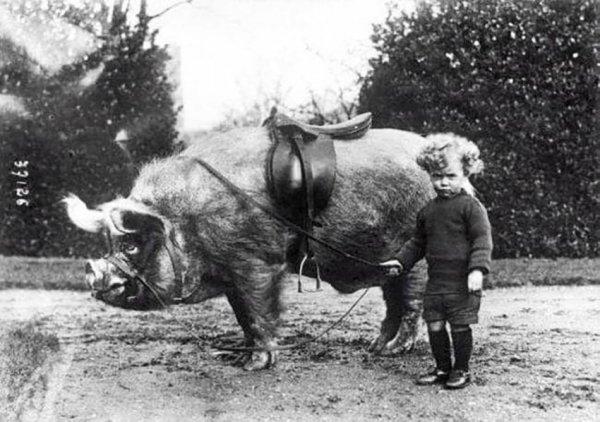 Мальчик и его кабан, 1930-е годы