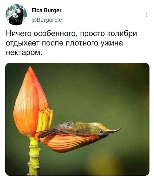 твит про колибри