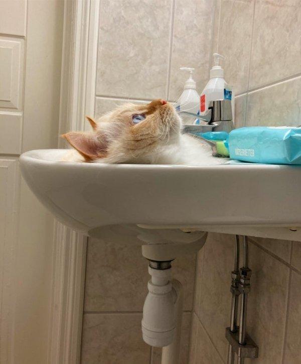 Кажется, что кот смылся в канализацию