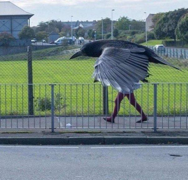 Обычно вороны носят чёрные лосины, но не сегодня