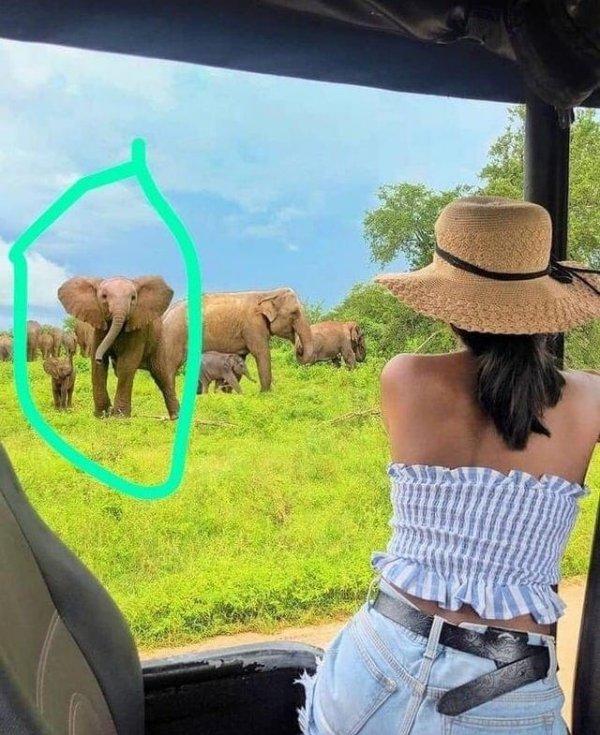 Инфлюенсер из Шри-Ланки прифотошопила на фото африканских слонов