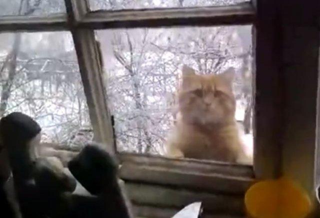 Смешной кот по кличке Пиксель забавно возвращается домой