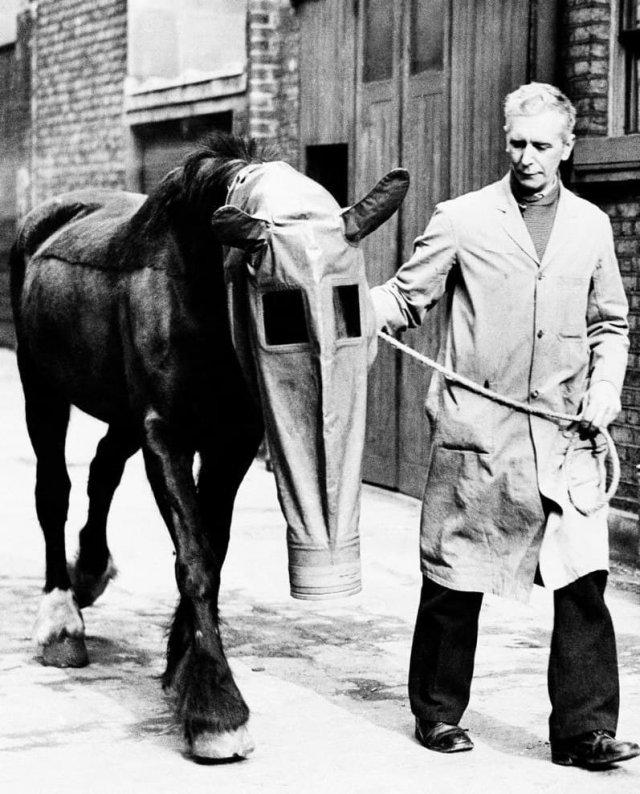 Противогазы для лошадей во время Первой мировой войны.