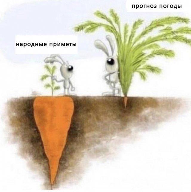 Зайцы и морковка