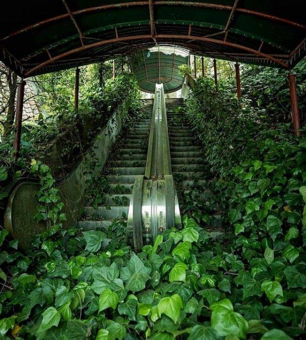 Заросший эскалатор