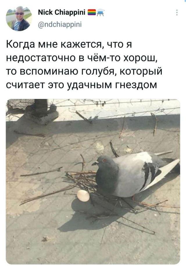 твит про голубя