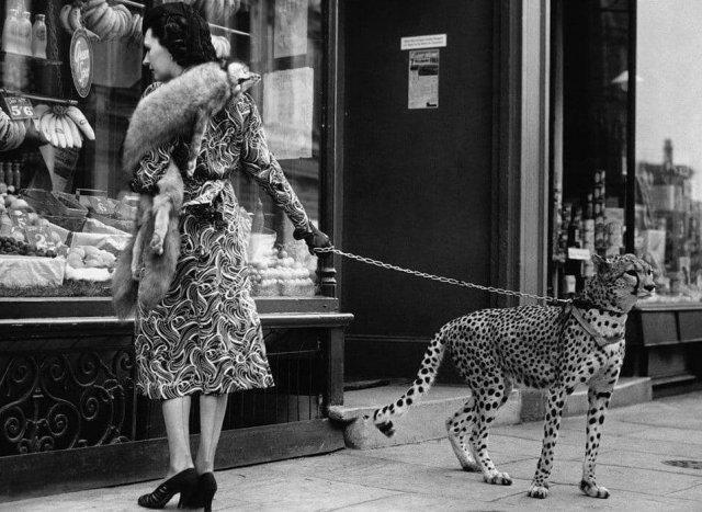 Актриса Филлис Гордон со своим ручным гепардом. Лондон, 1939 год