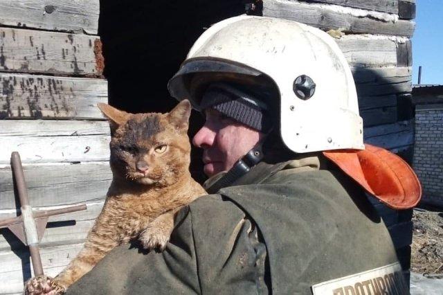 Фото дня: невозмутимый кот из Амурской области, которого вытащили из горящего дома