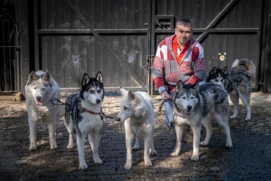 Британец создал городскую достопримечательность, просто просверлив дырки для собак в своем заборе