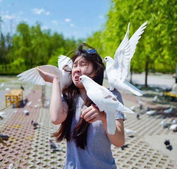 Милая фотография с голубями не получилась