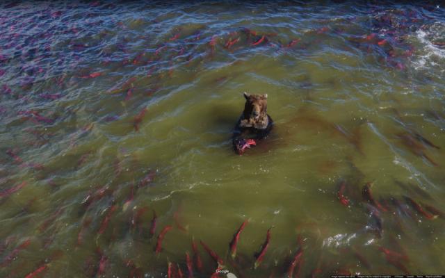 Медведь-рыболов
