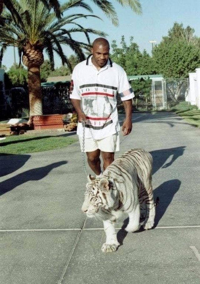 Майк Тайсон с тигром, 1990-е.
