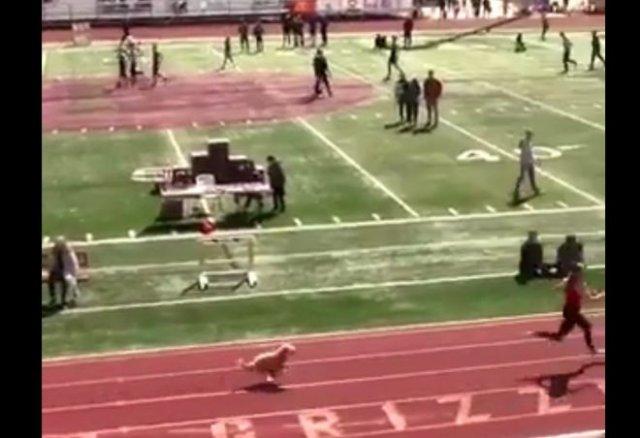 В Юте собака случайно победила в соревнованиях по легкой атлетике