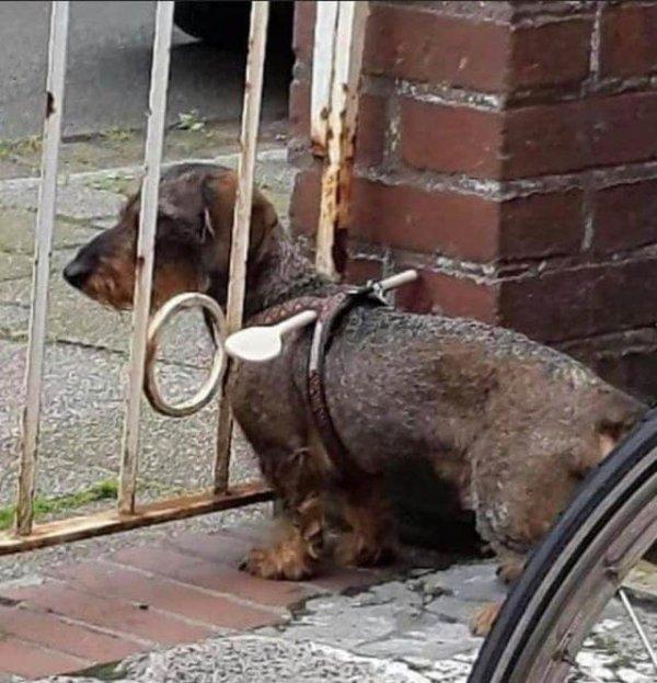 Чтобы собака не убегала за забор