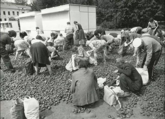 Бесплатная гнилая картошка, Москва, 1993 год