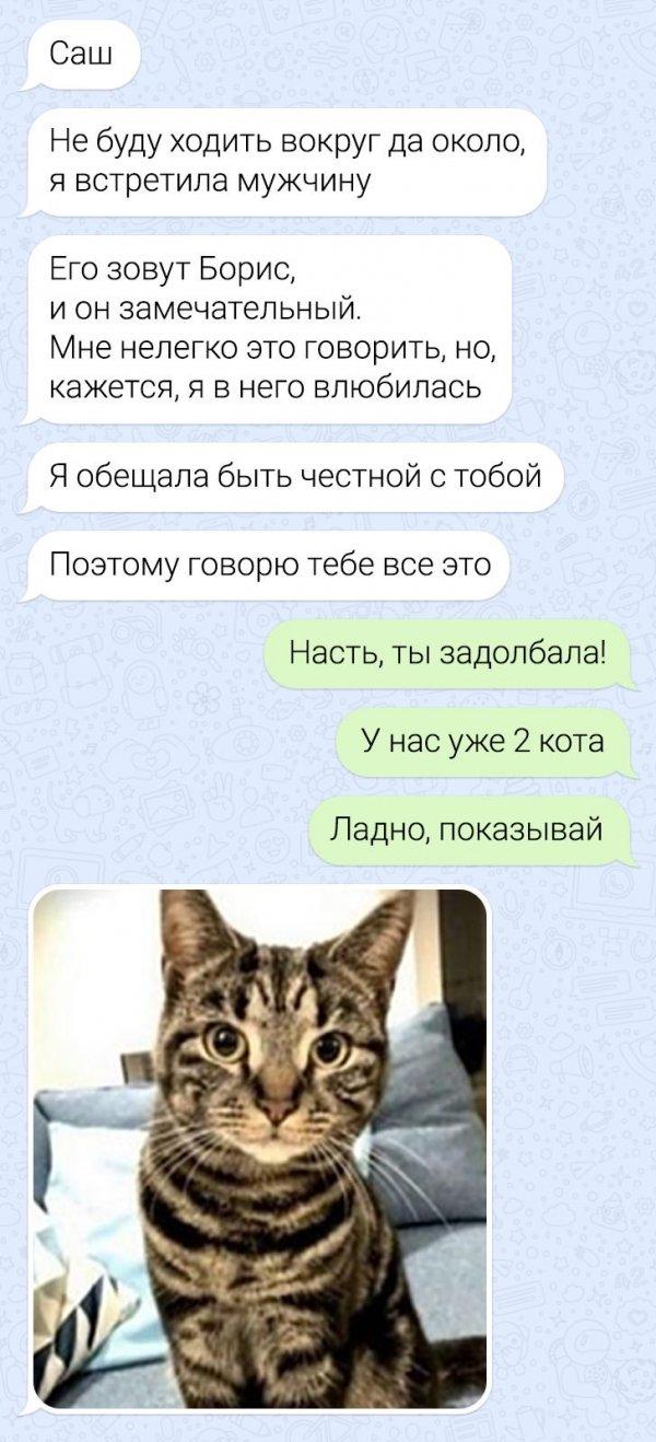 переписка про кота