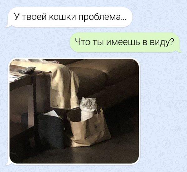 переписка про кошку