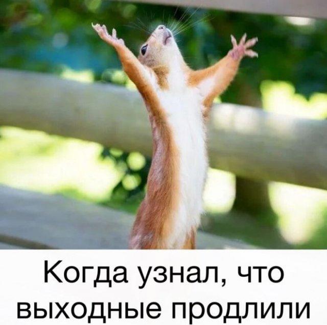 Что россияне говорят про выходные дни с 1 по 11 мая