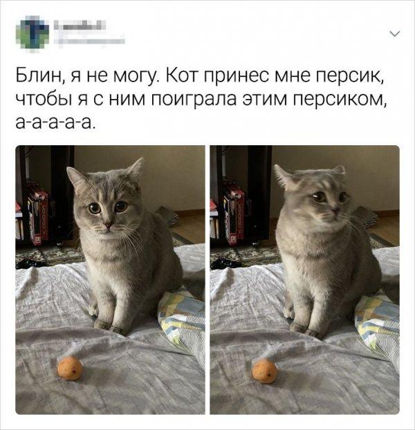 твит про персик