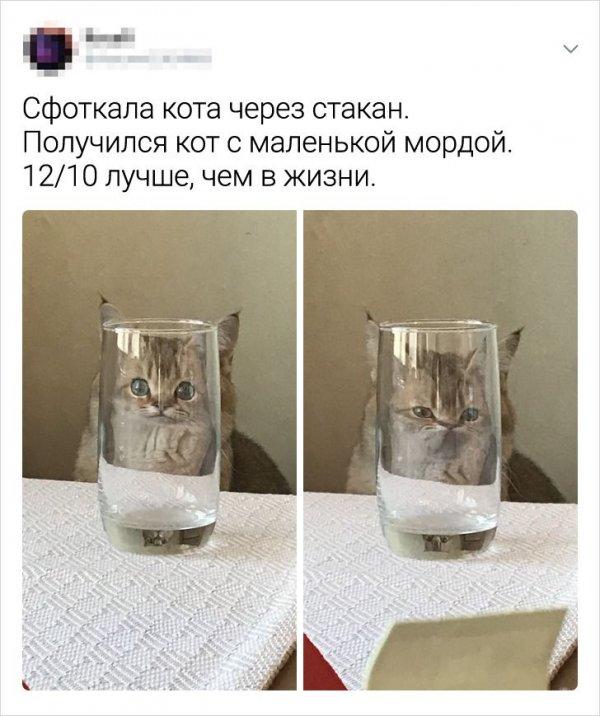 твит про стакан