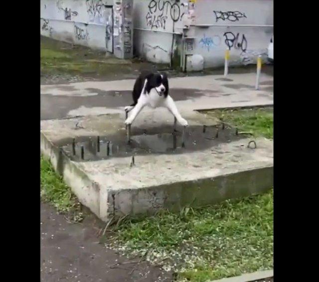"""Смешной пес, оказавшийся в """"западне"""""""