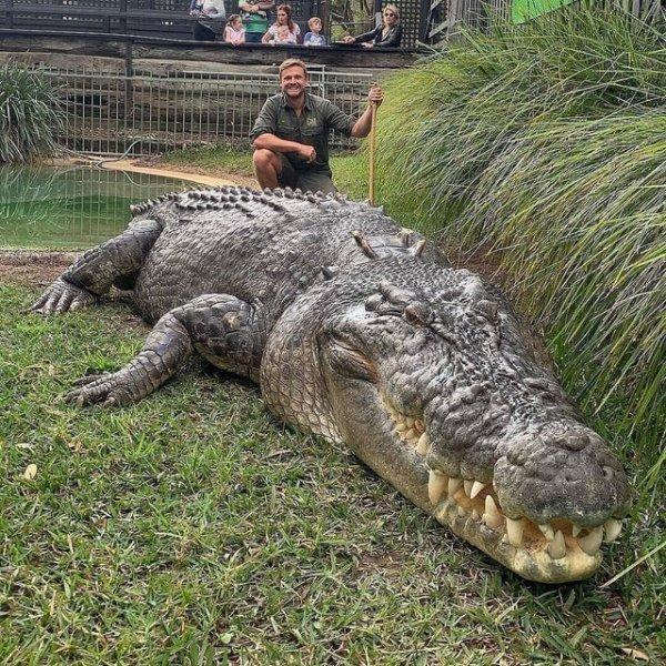 Элвис из Австралийского парка рептилий — гигантский морской крокодил
