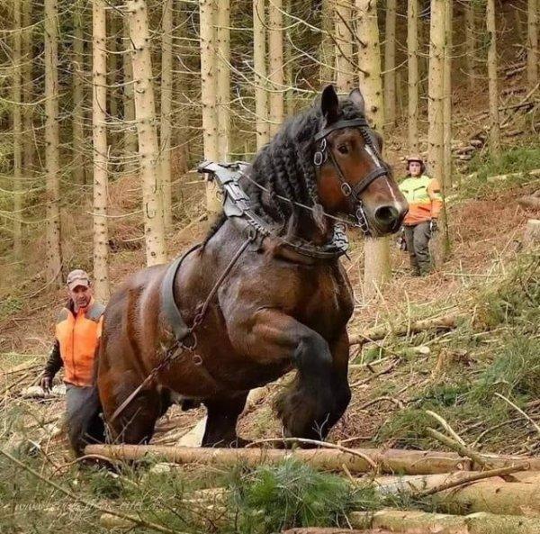Лошадь-танк