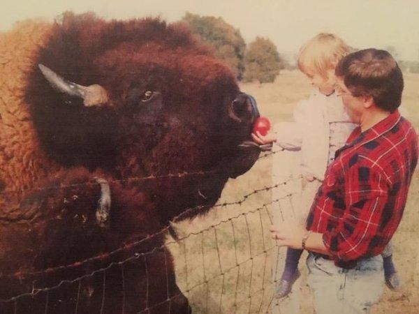 Удивительные и огромные творение природы - бизоны