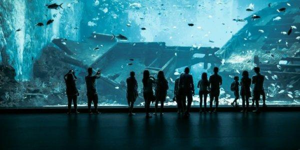Marine Life Park - один из крупнейших океанариумов в мире