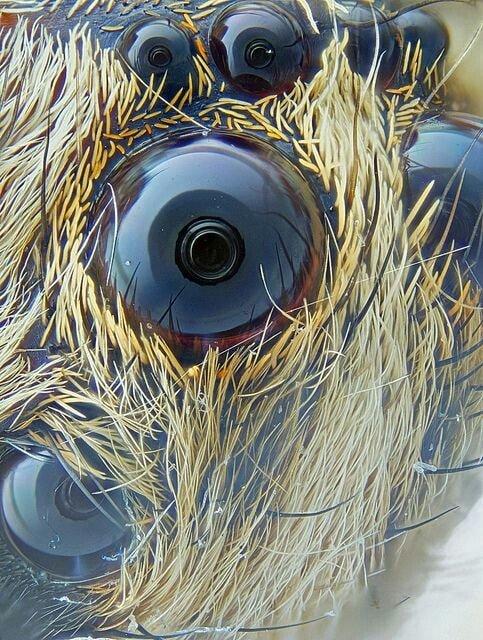 Глаза паука, в которых отражается камера
