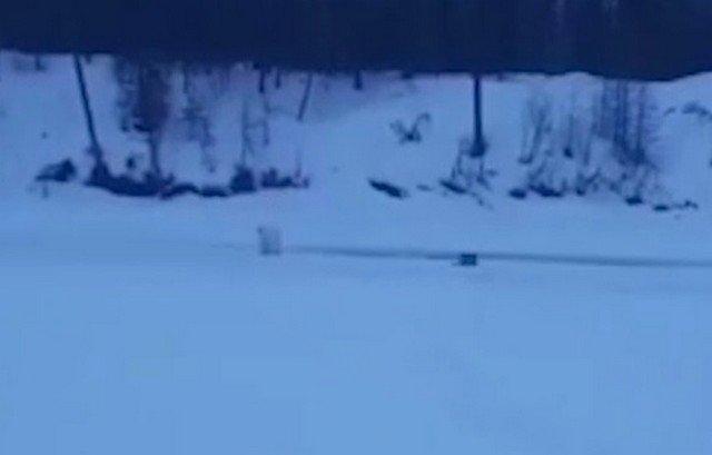 «Порыбачил называется»: что сделал белый медведь, когда увидел якутского рыбака