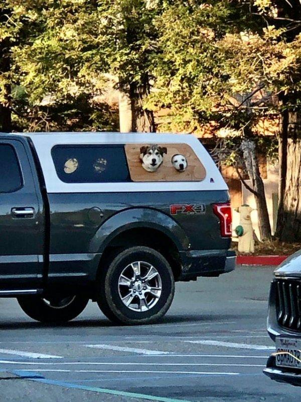 Приспособление для машины, благодаря которому собаки могут наблюдать за дорогой