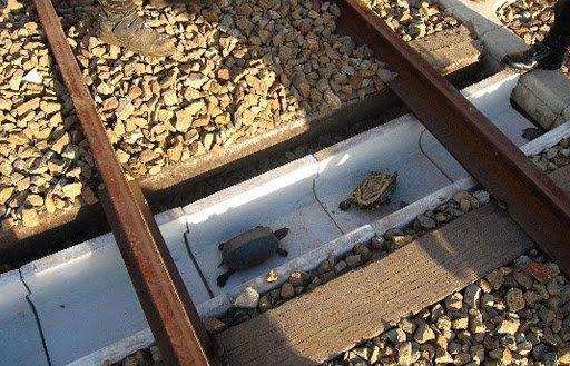 Специальные дорожки для черепах в Японии, чтобы они не попадали под поезд