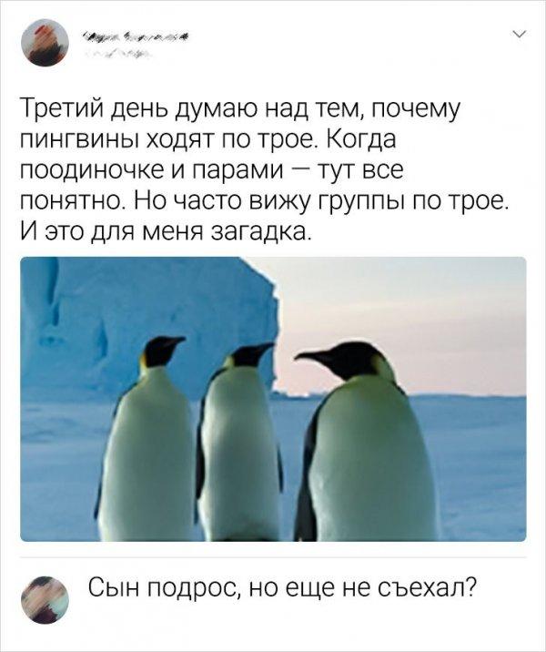 комментарий про пингвинов