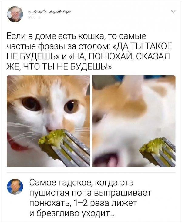 комментарий про кошку
