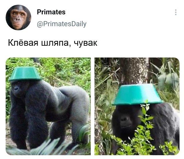 твит про шляпу