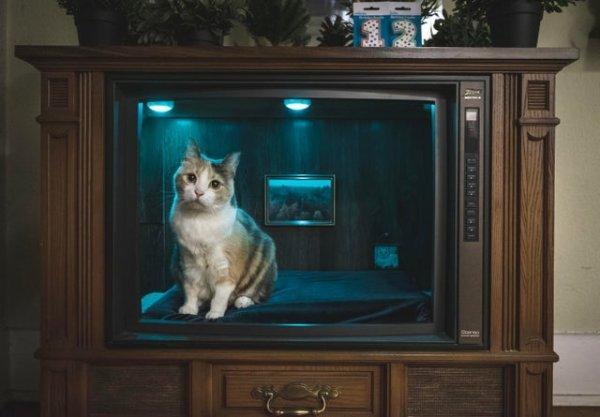 Старый телевизор, переделанный в кошачью постель, на день рождения моей кошки