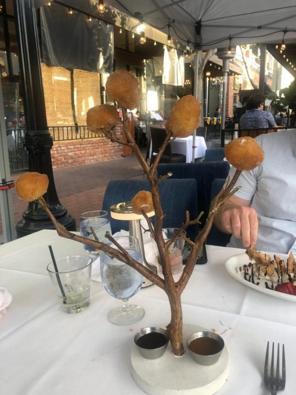 Пончиковое дерево