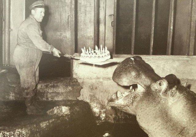 День рождения у гиппопотама, 1957 год.
