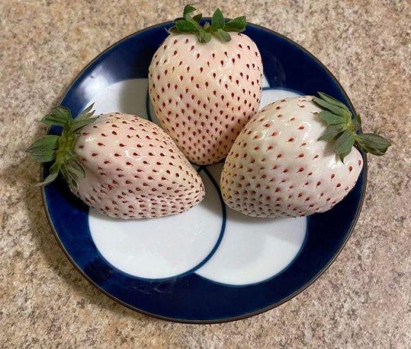Японская белая клубника. На вкус как обычная клубника, только без кислинки