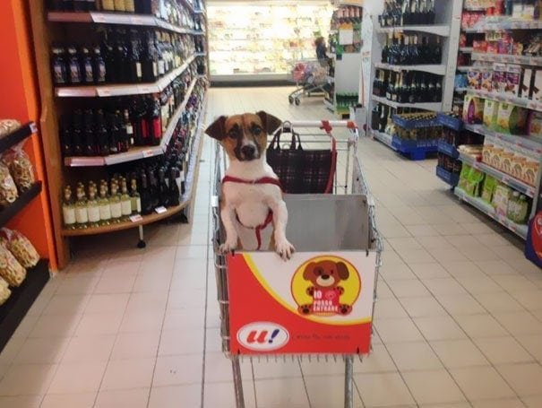Специальный отсек для собак, с которыми можно делать покупки в Италии