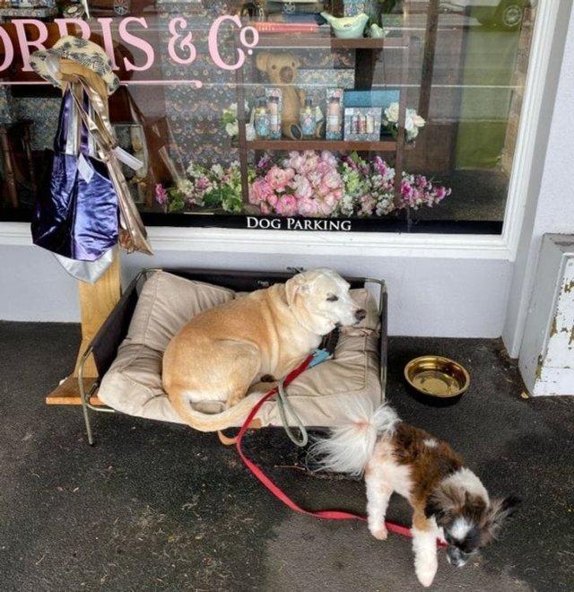 Места для домашних животных