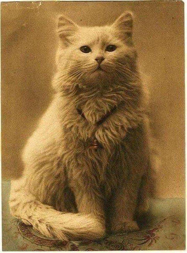 1880 год. Первое известное фото котика.