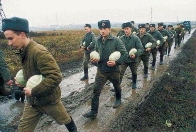 Солдаты срочники собирают капусту, 1996 год