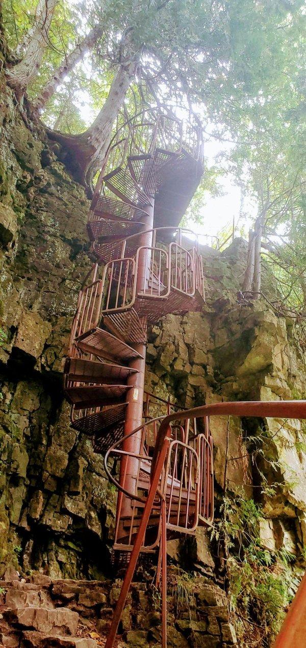 Лестница посреди леса