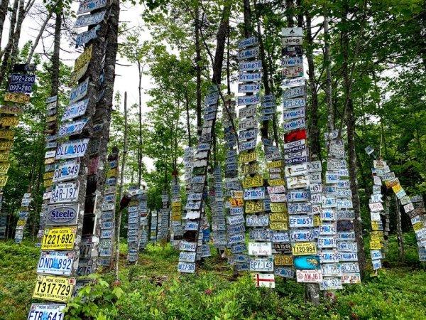 Лес номерных знаков